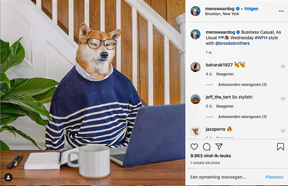 cats, dogs, instagram